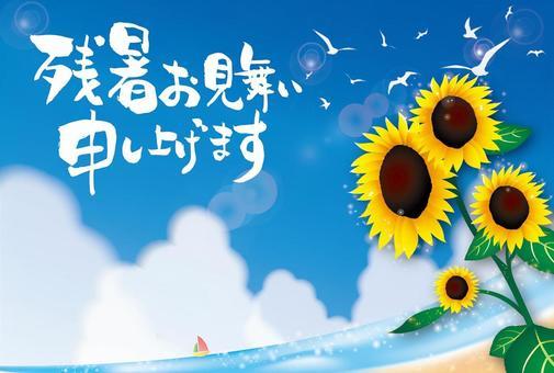 長時間的變暖同情明信片向日葵