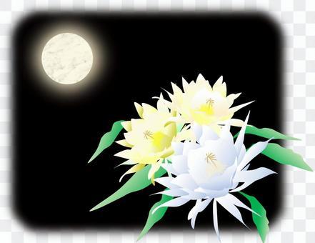 Tsukisami和月亮