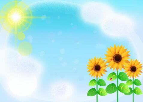 向日葵和藍天