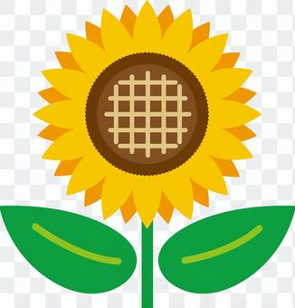 Sunflower (sunflower)