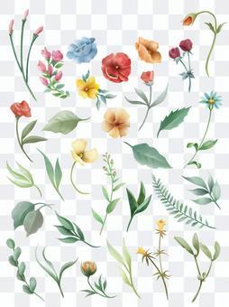野花和葉子的植物收藏