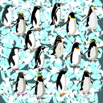 冰企鵝鳥涼涼