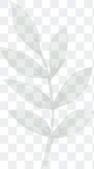 桉樹橄欖薄