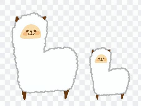 羊駝父母和孩子