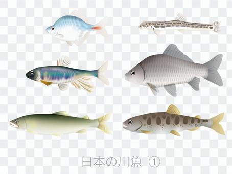 日本的河魚1