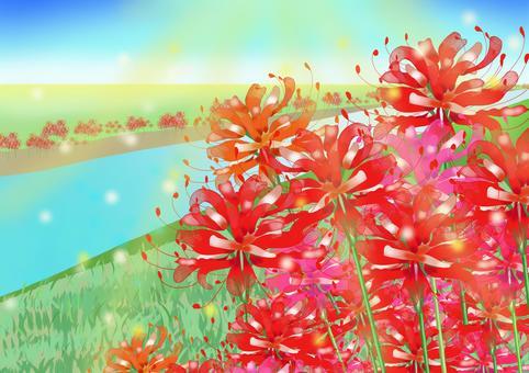 盛開在河床上的朱頂蘭的插圖