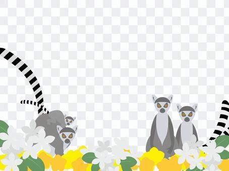 哇狐猴和鮮花