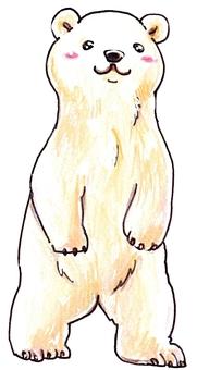 Polar bear standing up