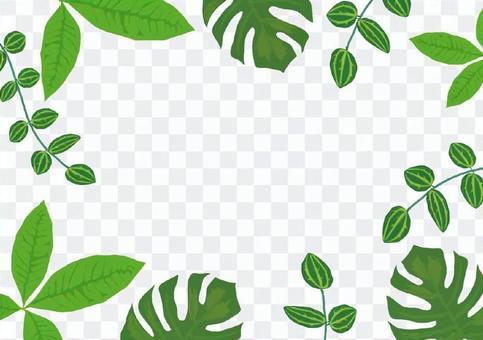植物葉子的框架