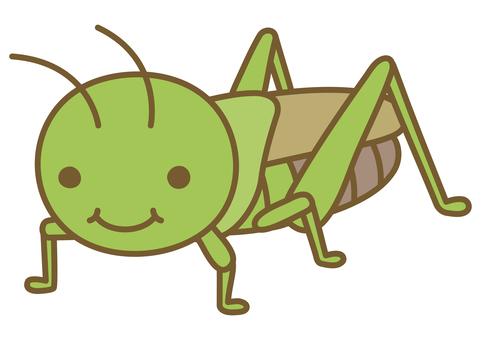 Cute grasshopper illustration