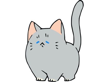 鬆散的俄羅斯藍貓