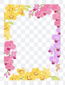 Orchid flower frame