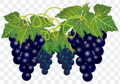 美味的葡萄18