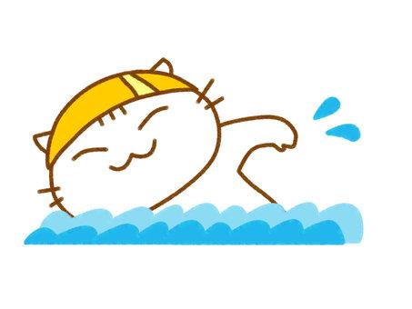 游泳的白貓