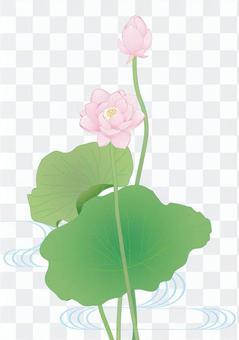Lotus flower _ hydrologic