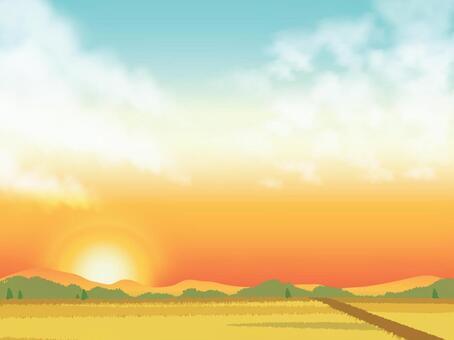 日落的天空和稻田