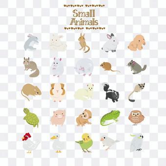 小動物插圖
