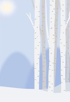 白樺林 冬