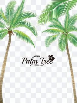 Palm 01