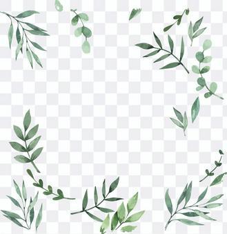 桉樹植物乾花