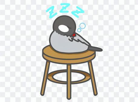 Java sparrow chair sleep