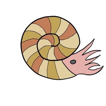 Simple ammonite