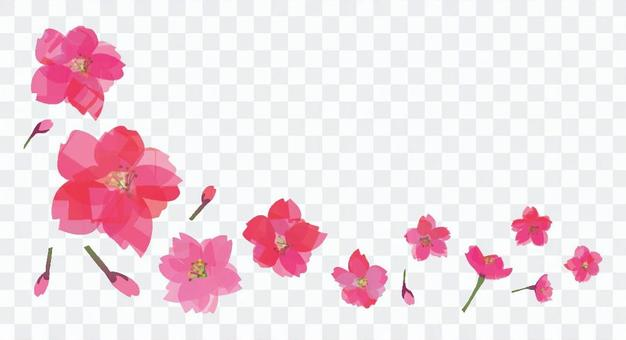 Flowers of peach and cherry blossoms
