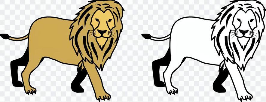 Lion carnivorous beast zoo