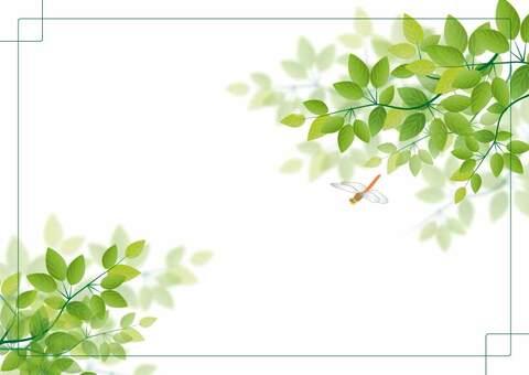 木葉,蜻蜓,藍藍的天空