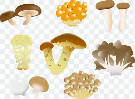 Mushrooms (edible) Various