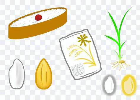 水稻插圖集