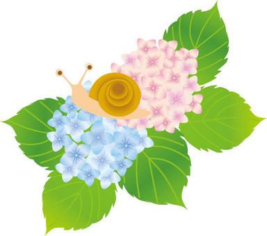 蝸牛和彩虹和繡球花