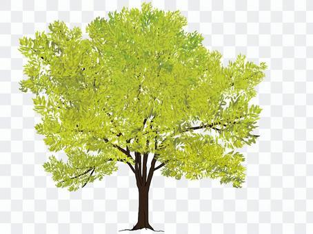 Street tree (new green)