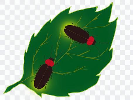 昆蟲(螢火蟲)