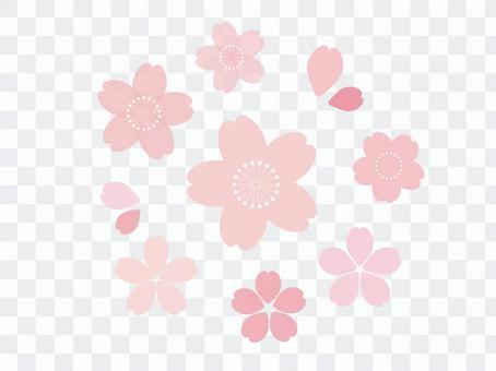 櫻花基本套裝