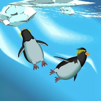 イワトビペンギン ペンギン 海 水中