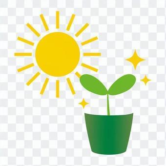 식물과 태양