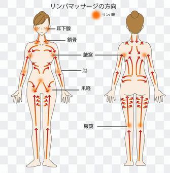 淋巴按摩指導身體
