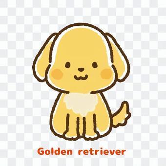 Golden Retriever Front