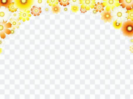 秋向け・コスモス背景8