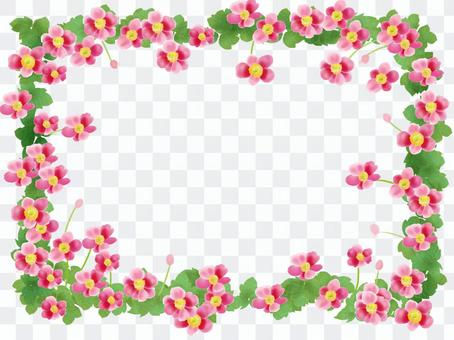 Shuigi菊花(Shumeigaku)粉紅色框架