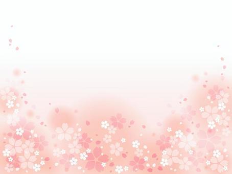 Sakura 57