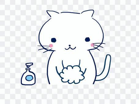 White cat washing hands