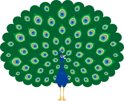 Peacock with spread wings
