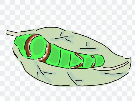 鳳蝶(幼蟲)