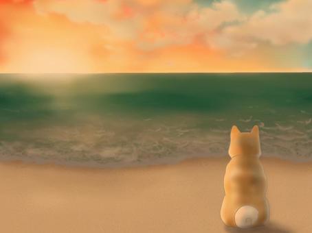 狗在日落時俯瞰大海的沙灘