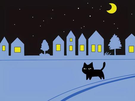 猫 夜の散歩