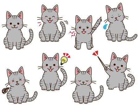 Sabatra cat pose collection