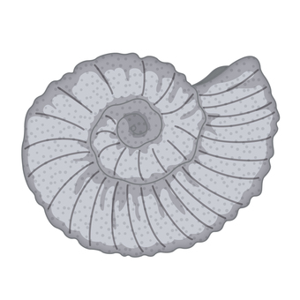 Fossil part1