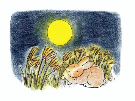 满月和兔子